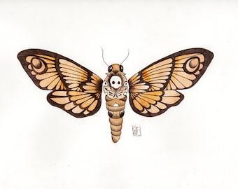 Death Head Moth 2 - Original Illustration