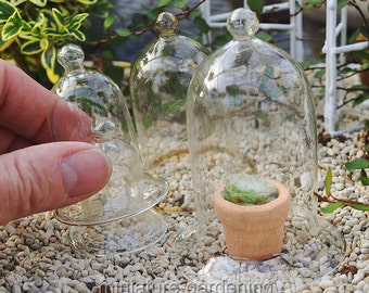 Glass Cloches, Set of 5 for Miniature Garden, Fairy Garden