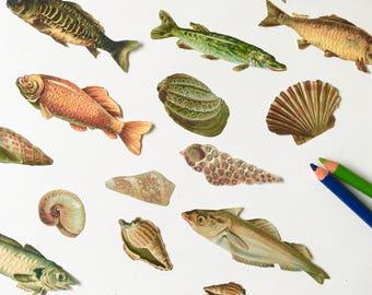 Die Cut Fish Etsy