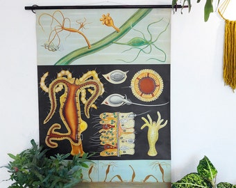 Hydra - Vintage Zoological School Chart