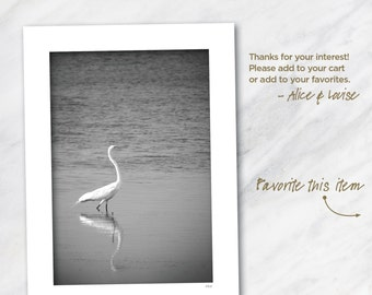 Big Pine Heron, Big Pine Key, Florida. 12x18 black and white fine art photograph matted to 18x24