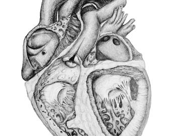 Print of heart, originally drawn in pencil.