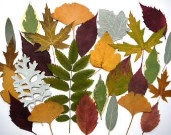 Dried pressed autumn leaves, Real dried leaves, Oshibana supplies, Variey of shapes and colors 30 pcs.