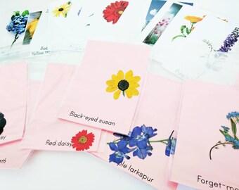 Wildflower identification kit - flower identification -pressed flowers - Montessori learning
