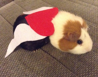 Valentines gift guinea pig cupid costume