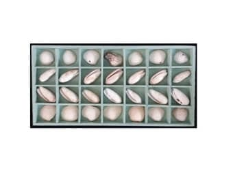 Coastal Decor Shells Shadowbox Wall Hanging