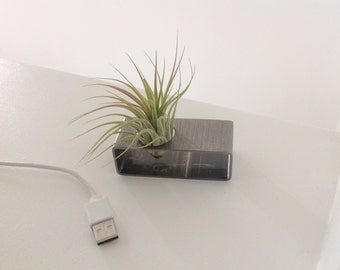 Air plant holder (stainless)