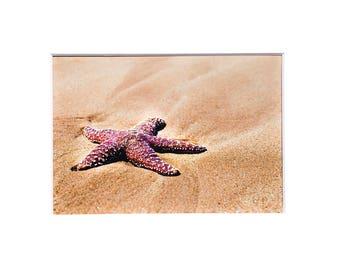 Starfish Photo Sea Star on Beach Photograph Print Original Signed Mat Matted