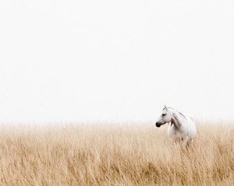 Morning Light, Horse Print, Color Photography, Horse Photo Wall Art, Horse in Field, Colorado Horse, Wilderness Print, Equestrian Art