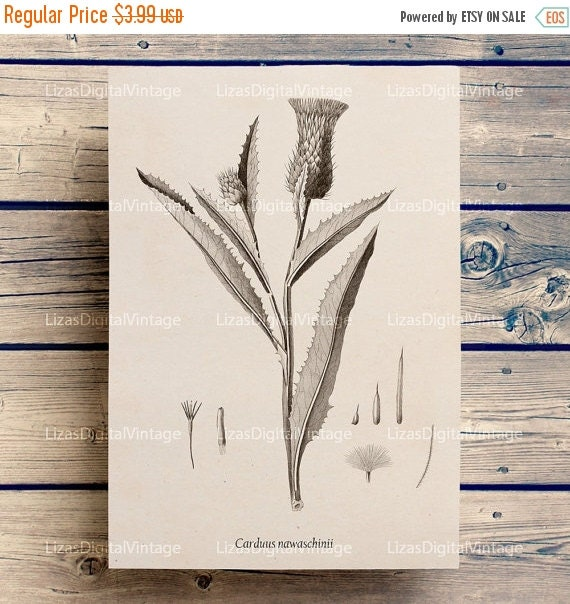 50% OFF Printable decor, Instant download print, Vintage pictures, Thistle print, Botanical decor, Thistle decor, Floral clip art, PNG JPG 3