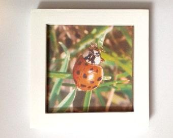 Ladybug - OutdoorPrintshop