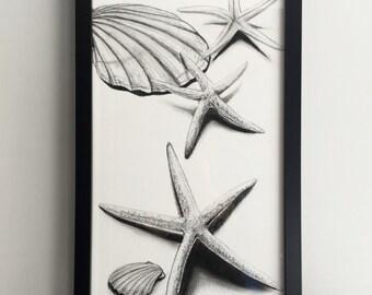 Charcoal shell and starfish