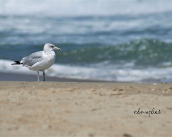End of Summer Photo, Gull on Beach, Seagull at OBX Beach Photo, Watching the Waves Roll In