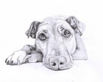 Custom Drawn Pet Portrait. Charcoal/graphite drawing. Drawn from photograph. Personalised Gift.