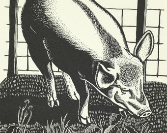 Vintage Pig print framed in black.  J.E.Maunton from The Old Enchantment 1938