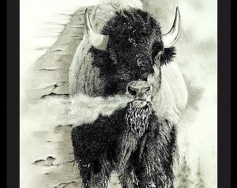 Buffalo - Framed Print