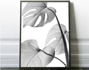 Tropical Leaf, Monstera, Black and White, Instant Leaf, Leaf Art, Tropical Poster, Leaf Poster, Leaf Decor, Tropical Art, Tropical Decor,