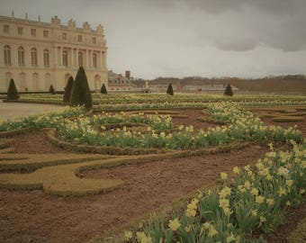 Yellow Daffodils, The Palace of Versailles