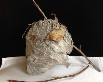 Paper Wasp Nest Bee Hive Bee's Nest Hornet Yellow Jacket Aerial Wasp Vespidae Crafting Taxidermy Nature Display Science Education