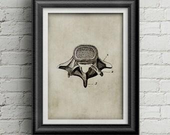 Anatomy  vertebra 010 - download vertebra poster - antique print of vertebra - retro poster - ancient anatomy - science