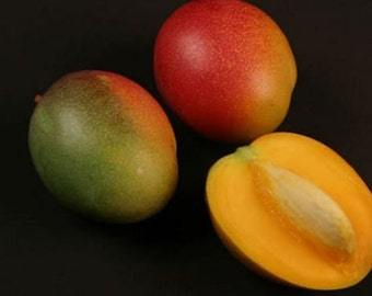 Haden variety grafted mango tree from Puerto Rico