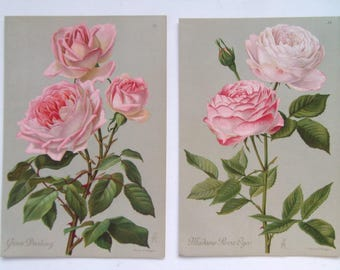 Roses stunning pair of Antique Chromolithographs dated 1888