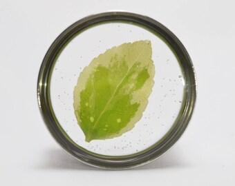 Leaf green plugs single flared / / leaves light green gauges
