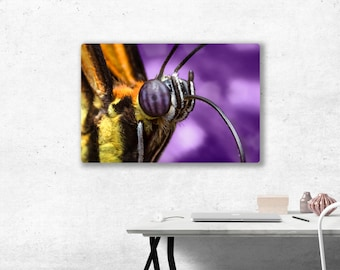 Butterfly Portrait Metal(aluminum) Print. Ready to hang.