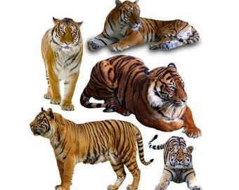 Tiger overlay photo animal photoshop png
