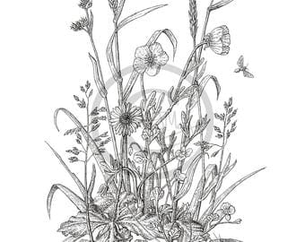 Meadow Flowers. Giclee Fine Art Print. Black and White, Fine Line, Pen & Ink Drawing