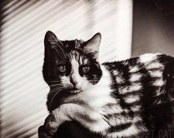 Cat Fine art photography, pet portrait, retro, film noir, cat lover gift, black and white, photo printing