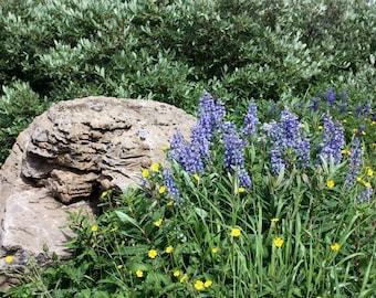 Rocks peeking behind flowers 16x20