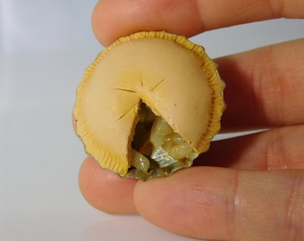Double Crust Apple Pie Magnet