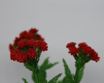 The fireballs flower