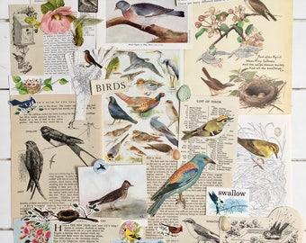 Birds & Eggs Ephemera | Vintage Paper Pack | Nature Journal | Scrapbooking | Smashbook | Art Journaling | Bird Illustrations | Junk Journal