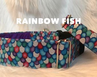 Rainbow Fish: dog collar, colorful fish scales