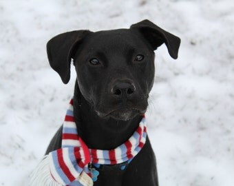 Black Dog in Winter Scarf