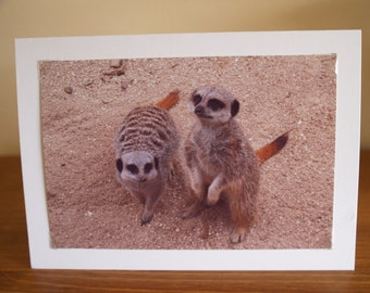 Photo Cards, Photo Greeting Card, Photo Note Cards, Meerkat Photo Card, Cute Greeting Card, Animal Greeting Cards, Fathers Day Card