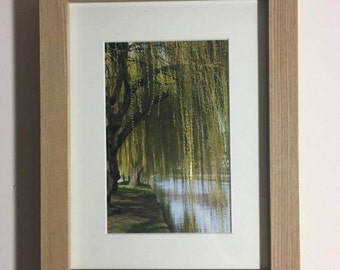 Framed Willow Tree Print