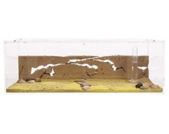 Ameisenfarm Starterkit BIG (Ameisen mit Königin FREE)-Ant farm, Formicarium, Ant