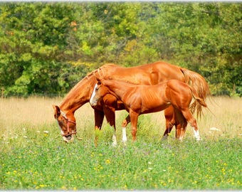 Horses in the meadow - mom and baby