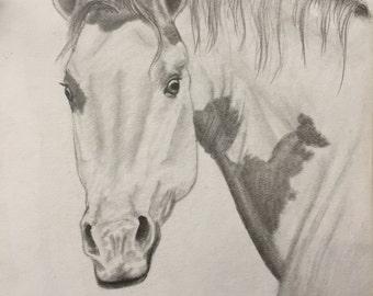 Paint Stock Horse in Graphite Portrait