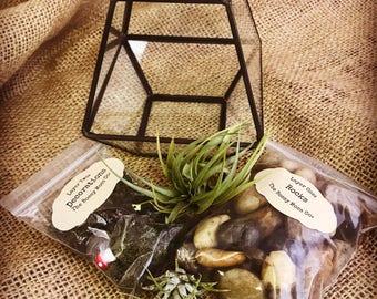 Geometric DIY Terrarium Kit *Great For Wedding Center Piece*