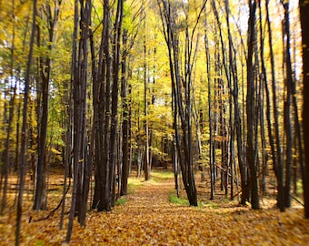Golden Autumn, Concord Township, Ohio, Autumn, Fall, Landscape, Landscape Photography, Travel, Travel Photography, Woods, Nature, Outdoors