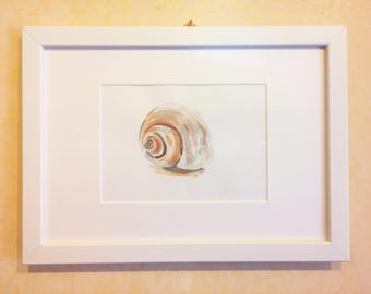 Clam shell on the beach-drawing mixed media on cardboard-acrylic painting and watercolor-white wood framed fish Picture