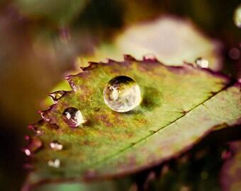 Water drop, Rose leaf, Instant download, Macro, Closeup, Printable wall art, Garden, Trending, Popular