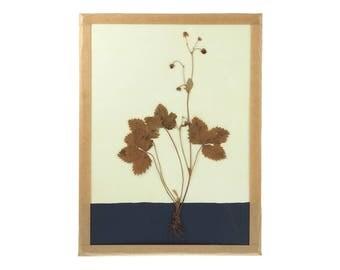 Herbarium - Colorama 5