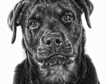 A4 Rottweiler print