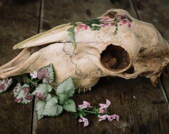 Skull Deadnettle Photoart
