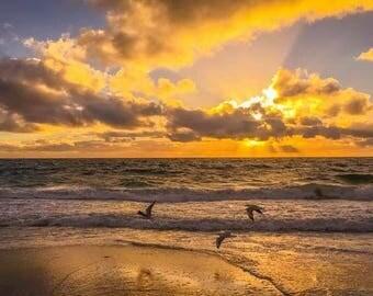 Mullaloo Beach, Sunset, Birds, Silouhette, Summer, Evening